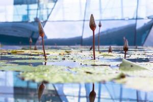 botanische tuinen singapore, singapore, 2020 - close-up van waterlelies in een kas