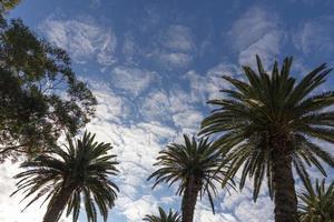 palmbomen onder een blauwe hemel