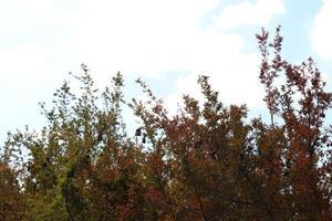 boomtoppen en blauwe hemel