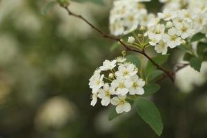 close-up van witte bloesem