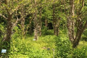 bomen in een park gedurende de dag foto