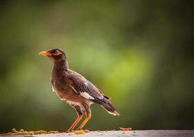 close-up van een bruine vogel