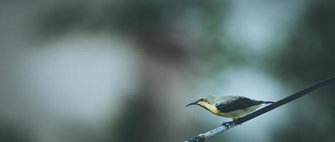 gele en zwarte vogel op een boomtak