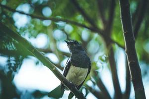 zwart-witte vogel in boom