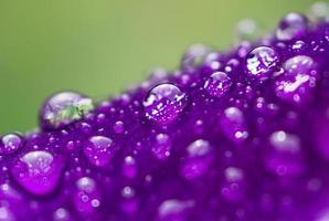 bloemblad met regendruppels