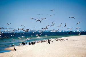 zeevogels kust foto