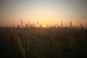 zonsondergang mist zomer veld foto