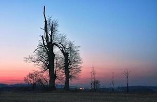 eenzame boom bij zonsondergang foto