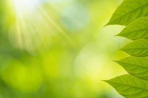 groene bladeren met bokeh achtergrond