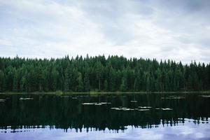 groene bomen naast waterlichaam onder bewolkte hemel overdag