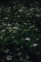 witte en paarse bloemen in tilt shift lens