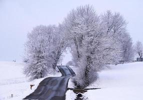besneeuwde kale bomen in de buurt van de weg