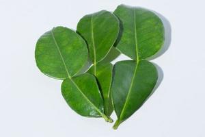 citrus hystrix bladeren op witte achtergrond foto