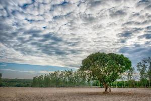 boom op het veld
