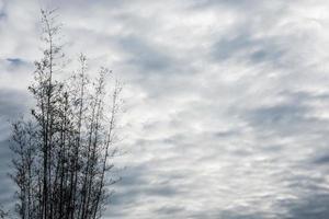 bomen onder dramatische hemel