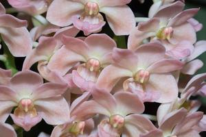 roze bloemen, close-up