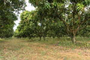 bomen op de boerderij