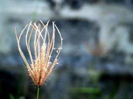 gedroogde wilde bloemen in de natuur