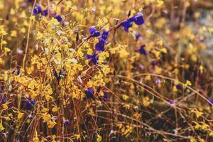 wilde bloemen in de natuur
