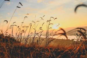 silhouet van een weiland bij zonsondergang