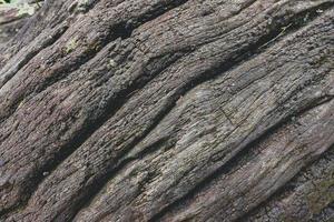 close-up van een dode boomstam