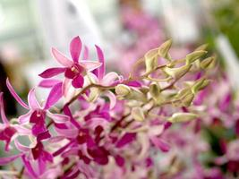 roze orchideebloemen foto