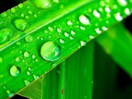 waterdruppels op blad