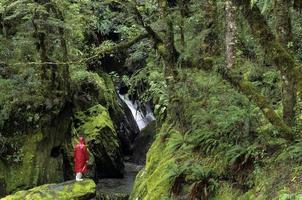 regenwoud, zuidereiland, nieuw-zeeland met persoon in rode regenjas. foto