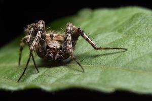 macro spin op een groen blad foto