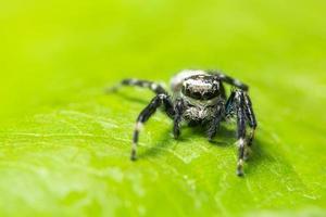 spin op een groen blad foto