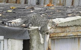 grijze kat op het dak van een garage