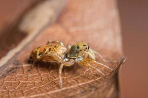 macrospin op een droog blad foto