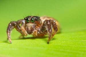 spin op een blad, close-up foto