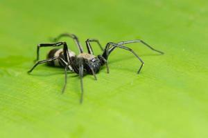 spin op een blad, close-up