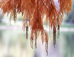 naaldboombladeren hangen boven water in de herfst