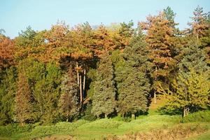 naaldbomen op een helling in het park in de herfst
