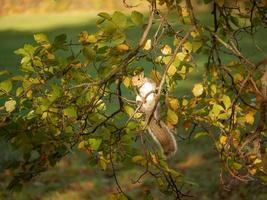 eekhoorn op de boom foto