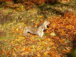 eekhoorn op de grond foto