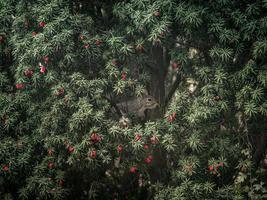 eekhoorn op een boom foto