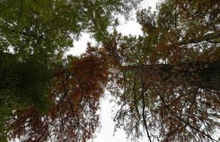 onderaanzicht van enkele boombladeren in de herfst