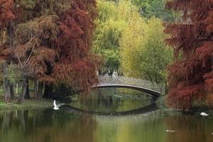 metalen brug over meer in park in de herfst