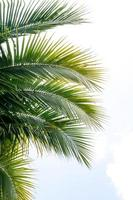 kokosnotenbladeren tegen blauwe hemel foto