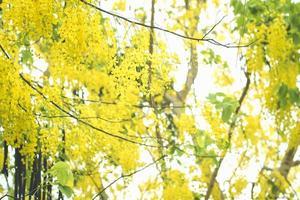 selectieve focus van herfst seizoen boom