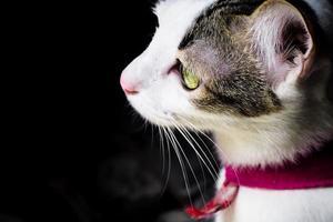 close-up zijaanzicht van een leuk katje