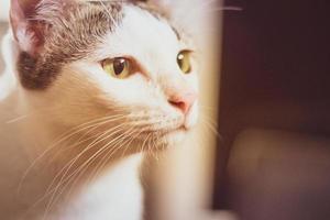nieuwsgierige zwart-witte kat