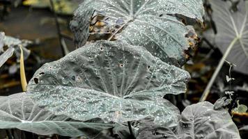 bladeren met druppels water