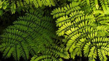 soft focus fern blad achtergrond