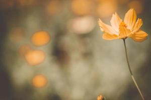 landschap met bloemen die de herfst vertegenwoordigen