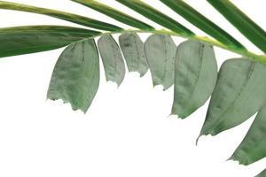 modern creatief groen palmblad dat op witte achtergrond wordt geïsoleerd foto