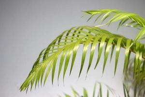 groen palmblad en schaduwen foto